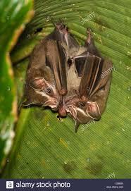 Bat Door Knocker by Bat Stock Photos U0026 Bat Stock Images Alamy