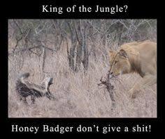 Honeybadger Meme - also known as the ex wife honey badger meme http jokideo com
