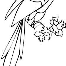 parrots coloring pages jungle parrot coloring page jungle parrot coloring page u2013 color