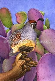 Pear Home Decor Print Of Gambel U0027s Quail Prickly Pear Watercolor Painting