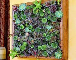 succulent frame etsy