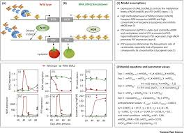 epigenetics for plant improvement current knowledge and modeling