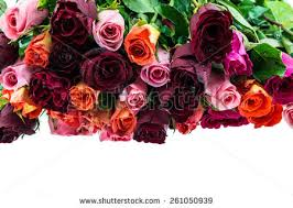 Multi Colored Roses Multi Colored Flowers Stock Photos Images U0026 Pictures Shutterstock
