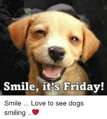 Dog Smiling Meme - smile it s friday smile love to see dogs smiling it s friday
