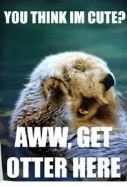 Meme Cute - you think im cute awwl get otter here cute meme on me me