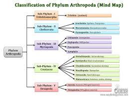 arthropoda classification subphylum classes easybiologyclass