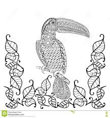 toucan bird anti stress coloring book for adults stock vector