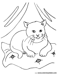 9 images of fat fluffy cats coloring pages mother cat with