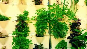 indoor herb garden ideas 15 fun and easy indoor herb garden ideas homesteading