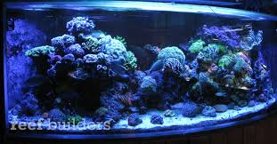 led aquarium lights for reef tanks reef brite actinic led striplights blueing up some deep reef tanks