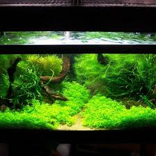 Aquascape Design Aquascaping Design Among Bright Lighting Clear Water Sea Plants
