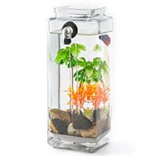 Goldfish In A Vase Self Cleaning Aquariums Best Rated Tanks In 2017 Reviews Fish