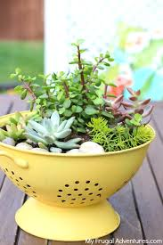 How To Make Planters by How To Make A Colander Planter My Frugal Adventures