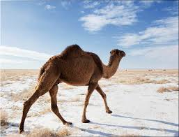 Snow In Sahara Ridiculously Weird Weather That You Have To See To Believe Life