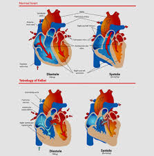 Diagram Heart Anatomy Heart Diagram U2013 15 Free Printable Word Excel Eps Psd Template