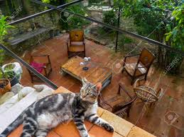 cat basking over a patio stock photo picture and royalty free