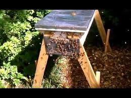 Robber Bee Screen On Top Bar Hive Youtube