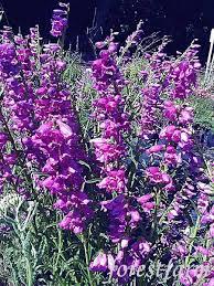 87 best plant identification images on pinterest plant
