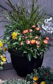 plante vivace soleil fleurs en pot conseils et idées pour enjoliver le jardin
