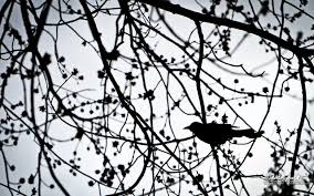 june 20 2012 bird in a tree mike bourgeault photography