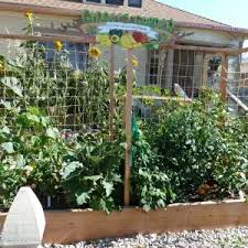 ideas for planting a vegetable garden elegant brilliant vegetable
