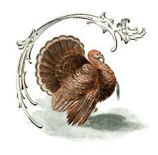 vintage thanksgiving clipart public domain turkey clip art u2013 clipart free download