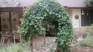 vines my gardener says u2026