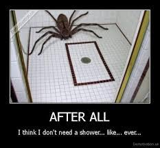 Shower Spider Meme - 92 best humor arachnophobia images on pinterest ha ha funny
