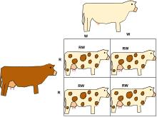 dominance genetics wikipedia