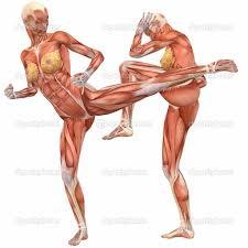 Google Human Anatomy Google 3d Human Body Human Anatomy Charts
