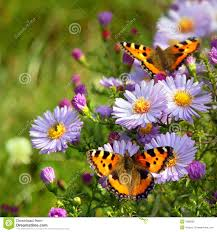 two butterfly on flowers stock photo image of 7888282