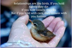 talking parrots pictures and quotes birds quotes graphics