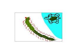 動物嘉年華 新相簿 蜈蚣與烏龜