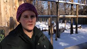 Potter Park Zoo Lights by Potter Park Zoo Gets Two Gray Wolves Youtube