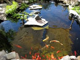 indoor ponds indoor pond for turtles cool find this pin and more on turtle