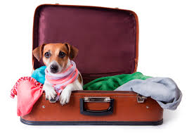 traveling with pets images Traveling with pets metropolitan washington airports authority jpg