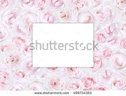 beautiful flower background perfect postcard template stock photo