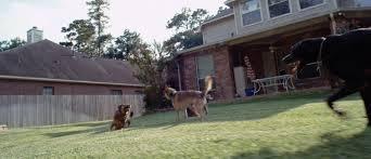 Dog Burial Backyard Requiem For A Dog A24