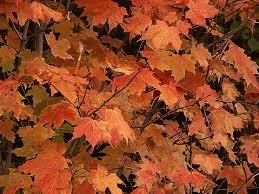 algonquin park fall leaves ontario photos canada n651