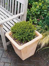 100 evergreen container plants for shade expert advice on