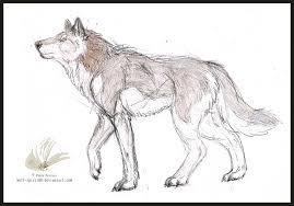 wolf walking colo sketch by wolf spirit89 on deviantart