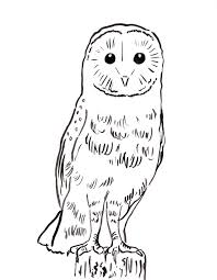 100 drawing pictures of owls 22 beautiful free printable wood