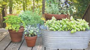 new vegetable garden ideas for small spaces u2013 creative maxx ideas