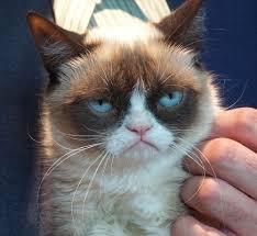 Grumpy Face Meme - sad cat meme breed image memes at relatably com