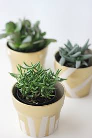Cute Succulent Pots Gilded Succulent Pots