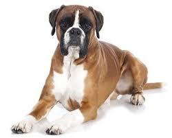 14 best indestructible dog beds reviews images on pinterest dog