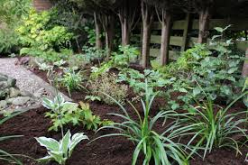 Plants That Dont Need Sunlight by Plants For Shade Garden Ninja Ltd Garden Design