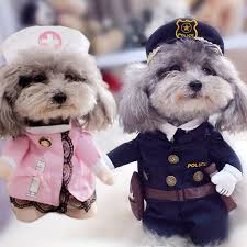 Chihuahua Halloween Costumes Dogs Halloween Costumes Reviews Shopping Dogs Halloween