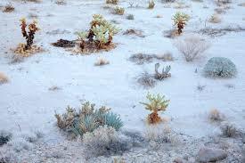 anza borrego desert anza borrego desert state park california