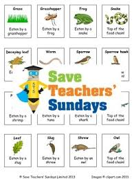 food chains lesson plan cards for activity and worksheet tpt